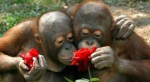 emotional-numbing-monkeys